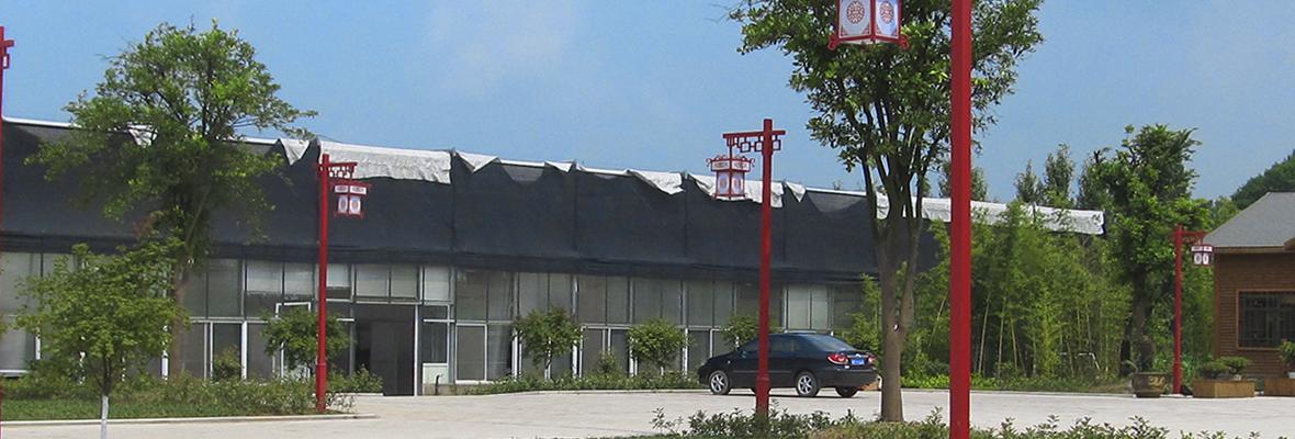 温室大棚及公司广场