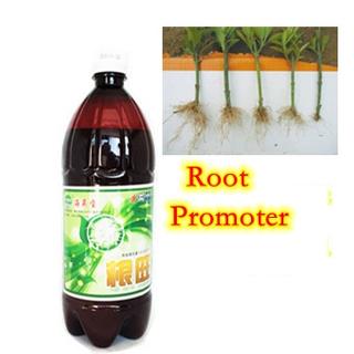 海草Microbial Organic Fertilizer與Root Promoter