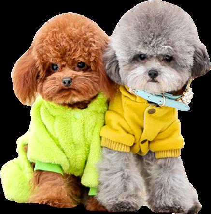 百强橡塑-13年经验专注于-狗项圈,宠物项圈,宠物定位器研发生产.png