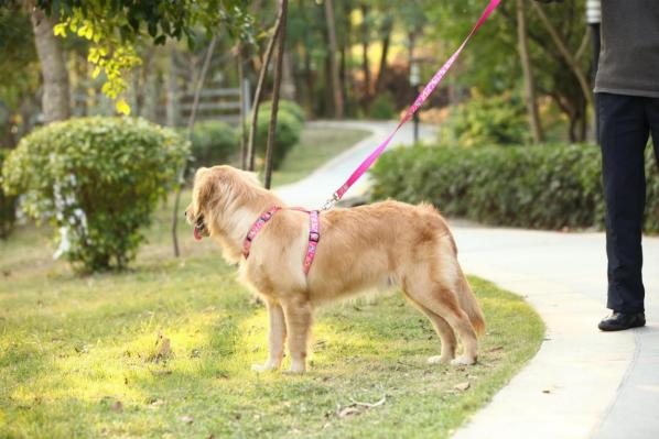 宠物牵引带, 自动牵引绳, 伸缩牵引绳, 狗狗牵引, 牵引绳-尼龙牵引绳系列